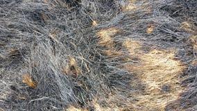 Bränt torrt gräs Arkivbild