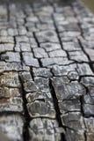 bränt trä Arkivbild