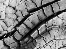 bränt trä Arkivfoto