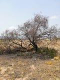 Bränt träd på en plats med knappast någon vegetation arkivbilder