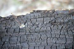 Bränt wood slut upp Fotografering för Bildbyråer