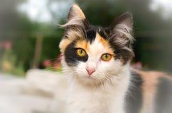 Brådskande katt Arkivfoton