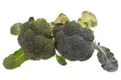 Brócolis Imagem de Stock Royalty Free