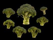 Brócolis ajustados isolados no fundo preto Configuração lisa imagem de stock