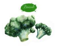 Brócolis frescos verdes isolados no fundo branco Fotos de Stock