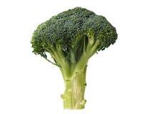 Brócolis isolados no branco fotografia de stock
