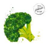 Brócolis verdes aquarela pintada O vegetal tirado mão com espirra e deixa cair do aquarelle no fundo branco Vetor imagem de stock