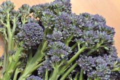 Brócolos emergentes roxos Fotografia de Stock Royalty Free