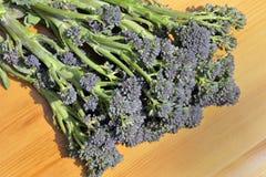 Brócolos emergentes roxos Fotos de Stock