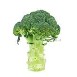 Bróculi aislado en blanco Fotografía de archivo libre de regalías