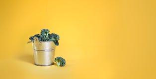 Bróculi creativo en un cubo de plata en fondo amarillo Fotos de archivo libres de regalías