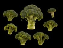 Bróculi determinado aislado en fondo negro Endecha plana imagen de archivo