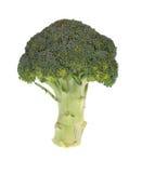 Bróculi en blanco imagen de archivo