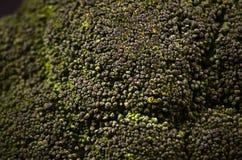 Bróculi en un fondo negro Imagenes de archivo