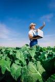 Bróculi fresco en mano del granjero Fotografía de archivo