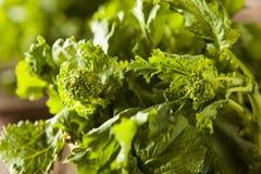 Bróculi verde crudo orgánico Rabe Rapini Imagenes de archivo