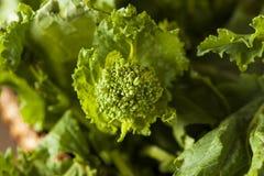 Bróculi verde crudo orgánico Rabe Rapini Fotografía de archivo libre de regalías