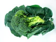 Bróculi y hoja Foto de archivo libre de regalías