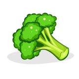 bróculos Bróculos frescos no fundo branco Vegetal orgânico saudável Ilustração do vetor Alimento do vegetariano Imagem de Stock