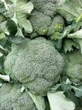 Bróculos frescos Fotografia de Stock