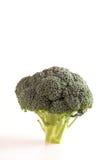 Bróculos isolados no fundo branco Imagem de Stock