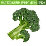 Bróculos no fundo branco Ilustração do vetor Fotografia de Stock Royalty Free
