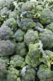 Bróculos no mercado do fazendeiro Foto de Stock