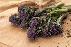 Bróculos roxos Imagem de Stock