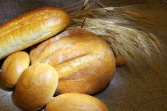 Bröd bagerit Bageriväxt Produktion av bröd Nytt vitt bröd från ugnen Arkivfoto