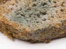 bröd gjuter rye royaltyfri foto