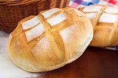 bröd släntrar runt fotografering för bildbyråer