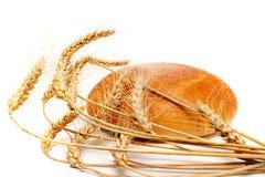 bröd spikes vete arkivfoto