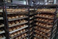 Bröddanandeprocess Fotografering för Bildbyråer