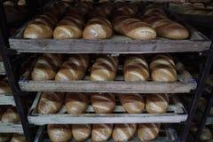 Bröddanandeprocess Royaltyfria Bilder