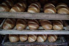 Bröddanandeprocess Arkivfoto