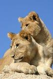 bröder royaltyfri bild