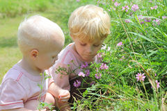 Bröder som väljer blommor Fotografering för Bildbyråer