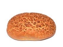 brödtiger royaltyfri fotografi