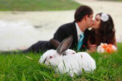 Bröllop förälskat ligga för ung brudkyssbrudgum på intelligens för grönt gräs royaltyfri bild