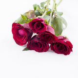 bröllop för valentin för ro för bakgrundspetal rose Royaltyfria Bilder