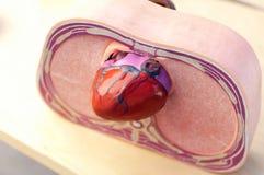 bröstkorgtvärsnitt Arkivfoto
