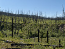Brûlé en bas de la forêt Photo libre de droits