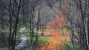 Brûlez le feu avec du bois dans la pelouse de Forest Green dans la forêt sur le fond du feu banque de vidéos