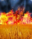 Brûlures de Wheatfield, flammes et fumée noire Images stock