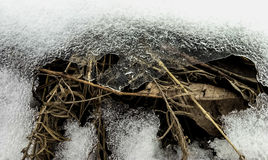 Brüche des trockenen Grases durch Schnee stockbilder