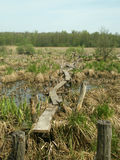 Brücke über dem Sumpf Lizenzfreie Stockfotos