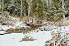 Brücke über einem Nebenfluss im Wald Lizenzfreie Stockbilder