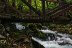 Brücke über Forest Stream Stockfotos