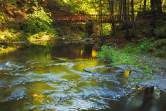 Brücke über Myosotis Lizenzfreie Stockfotos