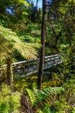Brücke auf einem Fluss Nationalpark Abel-Tasman, Neuseeland Lizenzfreies Stockfoto